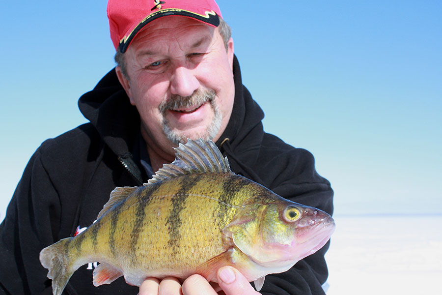 Minnesota Ice Fishing for Jumbo Perch